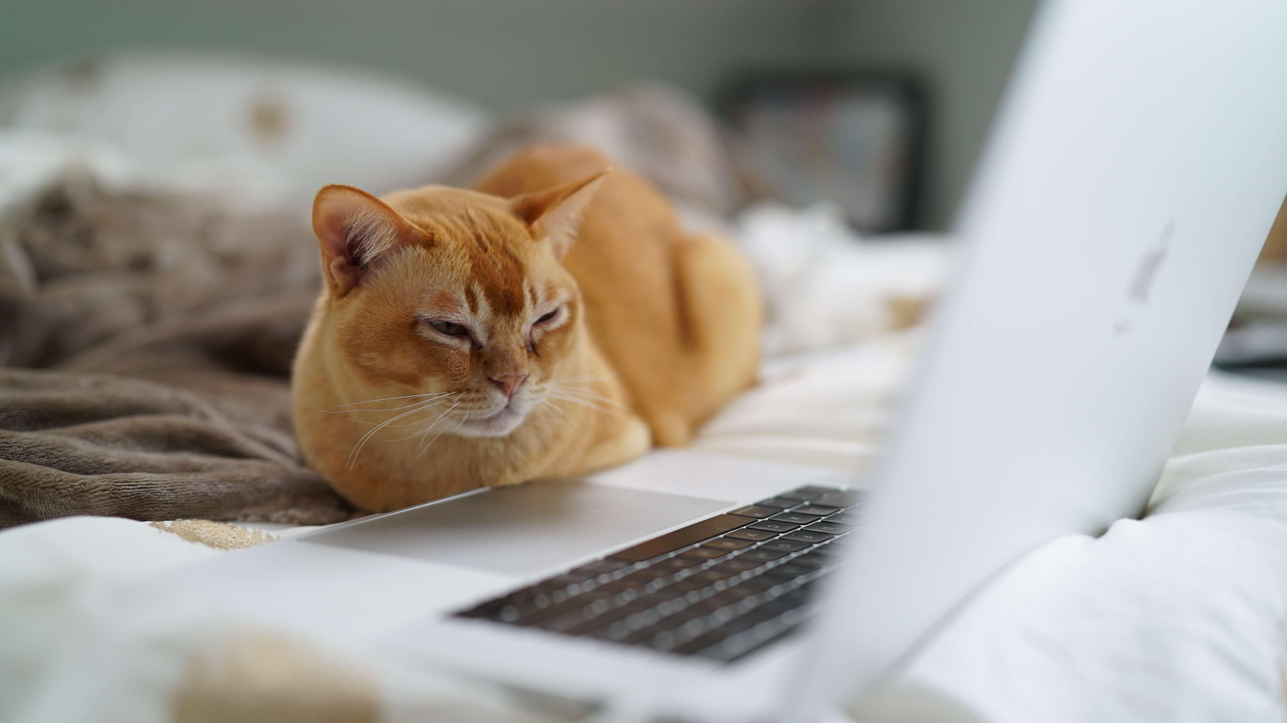 Studious cat reading a blog post